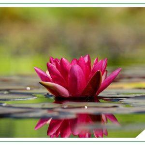 Mindfulness Para La Gestión Del Estrés