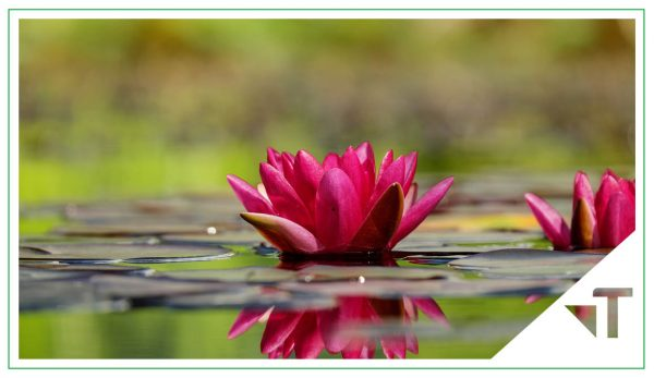 Mindfulness Para La Gestión Del Estrés Psicológico